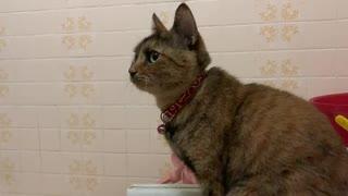 ちゃんとおーちゃん語で話しかけないと返事してくれない猫