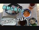 アジとヤリイカで美味しいご飯を食べる