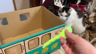 おもちゃを取るのが不器用すぎる猫