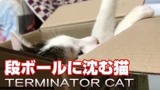 突然ターミネーターする猫