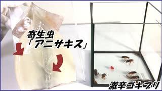 生イカに潜む寄生虫「アニサキス」をゴキブリに飲ませたら・・・。