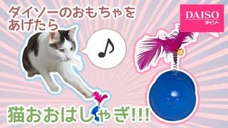 ダイソーのおもちゃあげたら猫大興奮!
