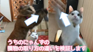 うちの猫の獲物の捕り方検証します