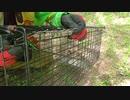 (箱わなレビュー回その2)変態忍者の、狩猟&有害鳥獣駆除従事活動記・その106