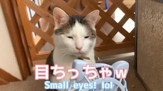 目がすごくちっちゃくなる猫