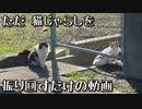 なかなか仲良くなれないジャンフォレスト的な野良猫