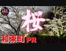 【京都和束町PR動画#8】和束町の桜スポット紹介します!