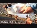 三毛猫が魚めがけてダツシュ!【野良猫の保護まであと99日】