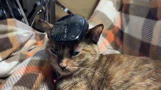 猫の上にネズミとか色々乗せてみました。