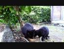 食堂の野良猫 2020-05-06