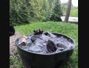 クマが風呂。