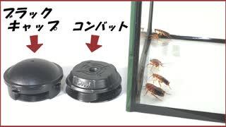 ゴキブリ駆除剤「コンバット」と「ブラックキャップ」を実際に比べてみたら・・・。