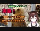【文野環合作】アライグマに捕食される饅頭環ちゃん【単品】