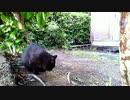 食堂の野良猫2020-05-10