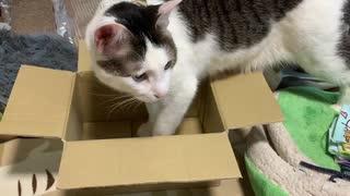 かなり小さい箱に6キロの猫が入ってみた