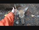 令和最初の狩猟生活(その122)