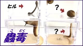ヌメヌメした生物で「蟲毒」を試そうとしたら、とてもNGな結果になった。【NG集】
