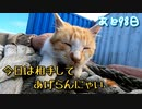 いじめっ子の存在を気にしながらの猫じゃらし【野良猫の保護まであと98日】
