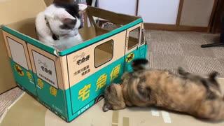 車の窓越しにケンカする猫たち