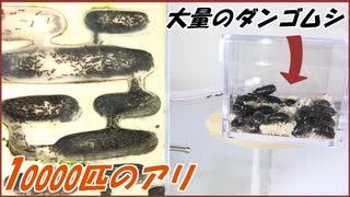 10000匹のアリに「大量のダンゴムシ」を与えたら、驚愕する結果になった。