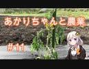 あかりちゃんと農業#11『トマトとその屋根』