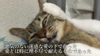 心優しい次男坊猫、猫なのにめっちゃ気を