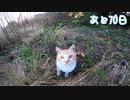 いじめっ子、天敵現る 3【野良猫の保護まであと70日】