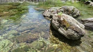 【生海月】なまくらじお【2020.5.25】
