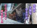 母猫がボス猫を威嚇して撃退『子猫もびっくり』