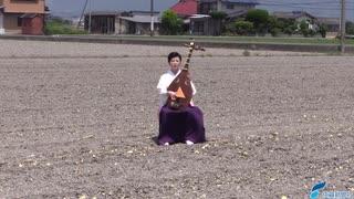 タマネギ畑の中心で琵琶を奏でる(2020年5