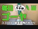 【毎日ゴーヤ】毎日58秒でゴーヤの成長をみる動画(33日目)