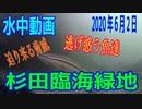 水中動画(2020年6月2日)in 杉田臨海緑地