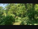 森と鳥のさえずり
