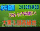 水中動画(2020年6月8日)in 大黒ふ頭西緑地