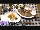アイゴ塩焼き&天ぷら作って食べてみた