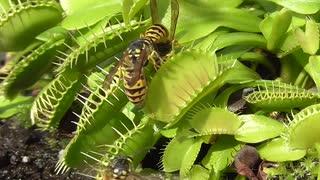 ず~っと見ていたい食虫植物