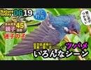 0619【ツバメいっぱい】カルガモ親子、迷子の子、ハト大群【今日撮り野鳥動画まとめ】