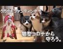 ネコたちを猫型コロナウイルスFIPから救おう!【クラウドファンディング】
