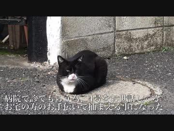 街の重鎮猫の病院搬送の為の捕獲に挑む