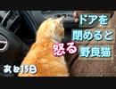 車内で家猫訓練 1【野良猫の保護まであと15日】