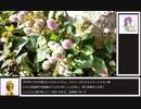 【ライト版】花騎士に実装されてほしい植物を紹介する動画【15選】