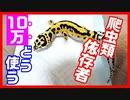 【特別定額給付金】爬虫類依存者は10万を貰ったら何に使うのか?