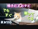 車内で家猫訓練 2【野良猫の保護まであと12日】