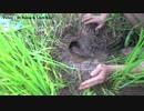 ホモと見る炭酸ネズミ