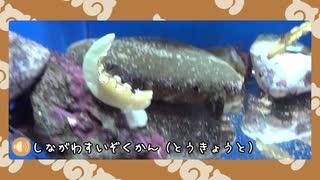 【剣盾】水族館パでワイワイバトル:13【