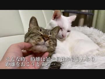 ミスター母性猫、育てた子猫に愛情をお返しされる