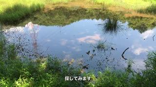 湿地で生き物を探索!