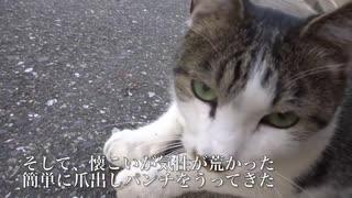人懐こい野良猫、兄弟猫と別れ演歌のよう