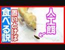 【ピンセットはもういらない⁉】レオバイト(人工餌)は置きエサでも食べてくれるのかを実験してみた!