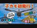 0629【子ガモ初めての飛行】オナガの鳴き声と若鳥。カメも多め【今日撮り野鳥動画まとめ】身近な生き物語